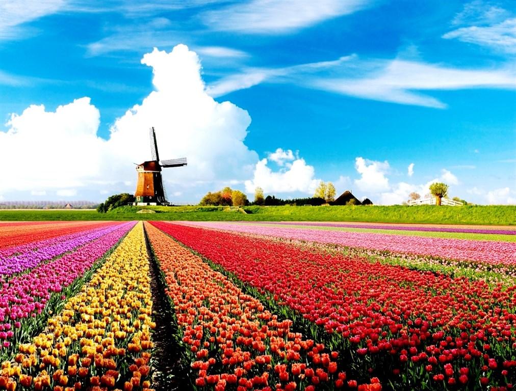 Nizozemí -