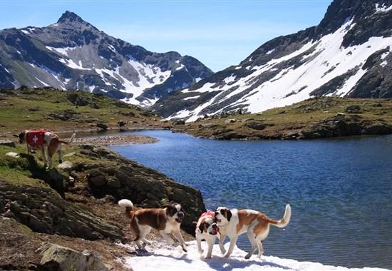 Za bernardýny, nejvyšší horou a nejdelším ledovcem Evropy - Švýcarsko