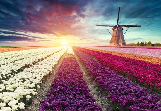 Holandsko plné barev a květů - Nizozemí
