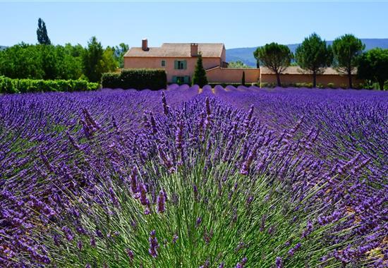 Provence plná překvapení - květinové korzo - Francie